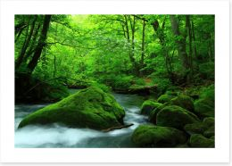 Forests Art Print 255862484
