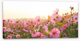 Meadows Stretched Canvas 257445164
