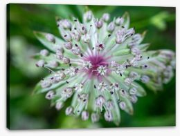 Flowers Stretched Canvas 275058910