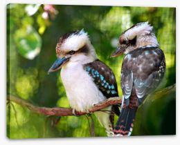 Kookaburra couple Stretched Canvas 2765710