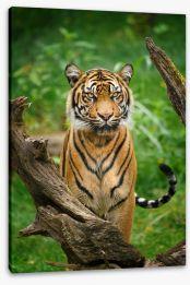 Mammals Stretched Canvas 279224803