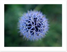 Flowers Art Print 280278765