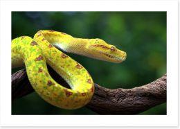 Reptiles / Amphibian