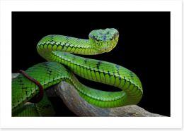 Reptiles / Amphibian Art Print 295055085