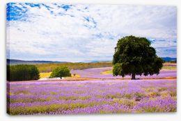 Picture perfect lavender farm Stretched Canvas 31187840