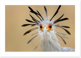 Birds Art Print 33105228