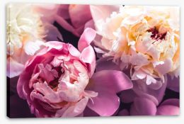 Flowers Stretched Canvas 358626363
