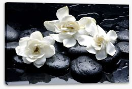 Gardenia flowers and pebbles Stretched Canvas 37406952