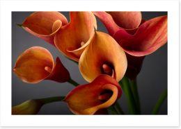 Orange calla lilies Art Print 37917476
