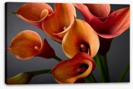 Orange calla lilies Stretched Canvas 37917476