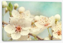Cherry blossoms Stretched Canvas 40136004