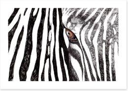 Zebra watching Art Print 40374642