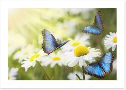 Daisy blue butterflies