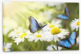 Daisy blue butterflies Stretched Canvas 41618797