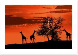 Savanna giraffe sunset Art Print 41910299