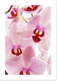 Flowers Art Print 42699785