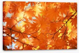 Golden maple leaves Stretched Canvas 44346191