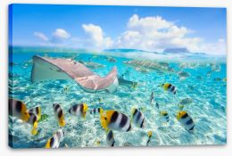 Stingray lagoon Stretched Canvas 45286154