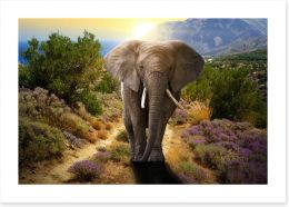 Elephant stroll Art Print 45496510