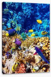 Fish / Aquatic Stretched Canvas 46219843