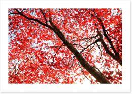 Red Japanese maple Art Print 46244964