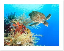 Turtle in the coral Art Print 46969332