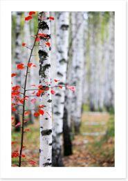Autumn birch Art Print 47391445