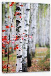 Autumn birch Stretched Canvas 47391445