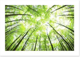 Green forest canopy Art Print 48198194