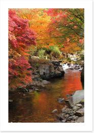 Autumn Maple stream
