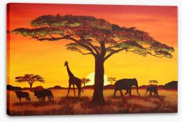African sunset Stretched Canvas 48838915
