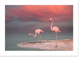 Pink flamingo sunset