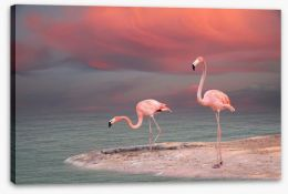 Pink flamingo sunset Stretched Canvas 50065189