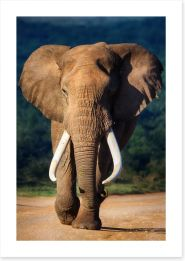 Elephant approaching Art Print 51074882