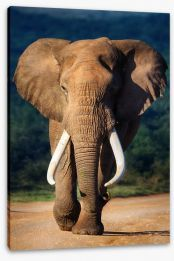 Elephant approaching Stretched Canvas 51074882