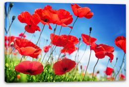 Poppies on a sunny day Stretched Canvas 51408151