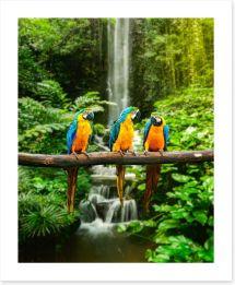 Birds Art Print 51933543
