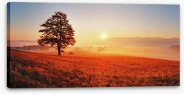 Lone tree in the sunrise meadow Stretched Canvas 52071979