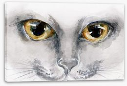 Cat eyes Stretched Canvas 52241866