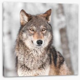 Grey wolf Stretched Canvas 52405094