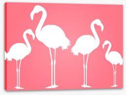 White flamingoes