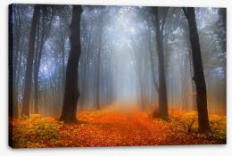 Foggy day in the forest Stretched Canvas 52986015