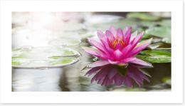 Pink water lily Art Print 52988888