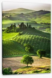 Tuscan olive groves and vineyards Stretched Canvas 53355853