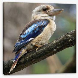 Kookaburra on a gum tree Stretched Canvas 53368392