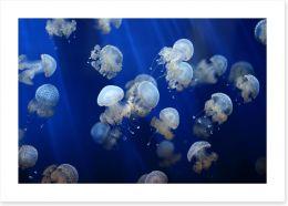Floating jellyfish Art Print 53724453