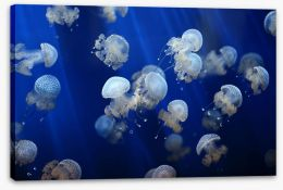 Floating jellyfish Stretched Canvas 53724453