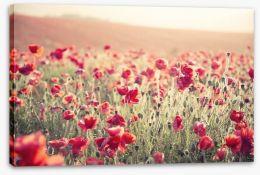 Poppy field sundown Stretched Canvas 54227252