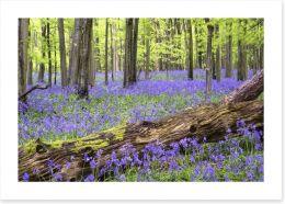 Vibrant bluebell forest