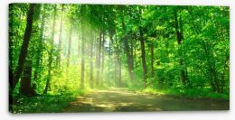 Sunbeam on the forest road Stretched Canvas 55128524